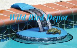 Frog Log @ Wild Bird Depot